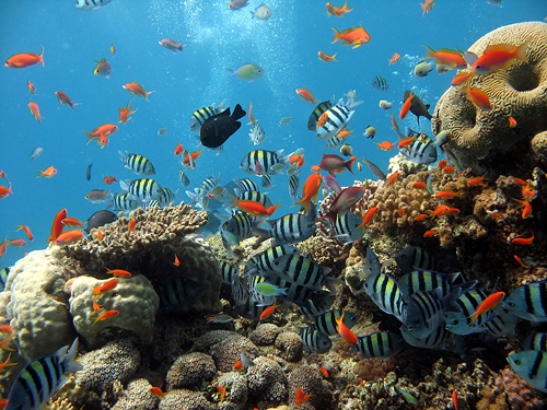 Aquariums of Maui